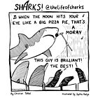 Sharks! That's a Moray by lifeofsharks
