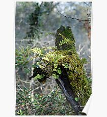 Moss, lichen, and Resurrection Fern Poster