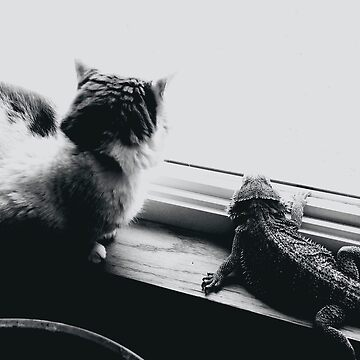 Cat and Lizard  by cathpinc