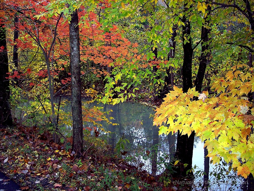 Streams Of Fall Colors by NatureGreeting Cards ©ccwri