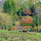Rural by Harry Oldmeadow