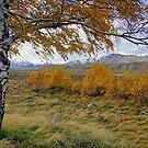NZ Landscape by Harry Oldmeadow
