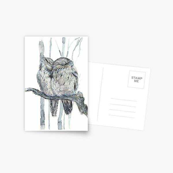 Tawny Frogmouth Postcard