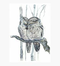 Tawny Frogmouth Photographic Print