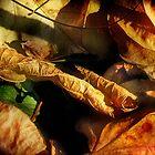 Rolled Gold by Nadya Johnson