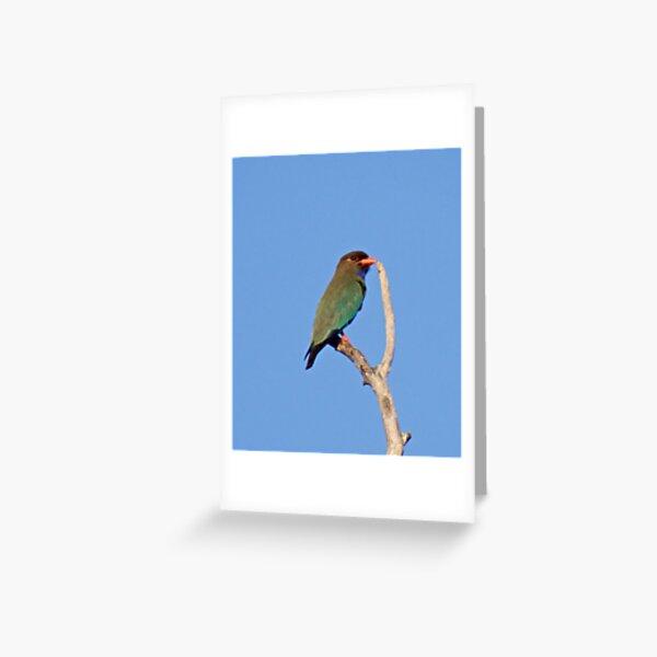 NT ~ EXOTIC ~ Dollarbird eAR82XZN by David Irwin ~ WO Greeting Card