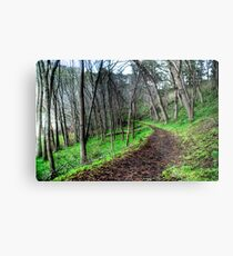 Forrest Valley Lakes Metal Print