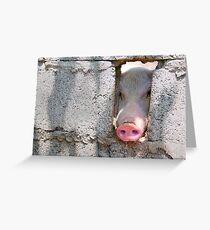 peeping pig Greeting Card