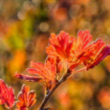 Autumn's Glow 3 by wekegene