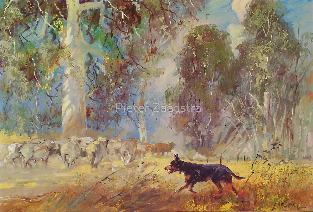 Fred the Kelpie - Driving the Flock by Tanya Zaadstra
