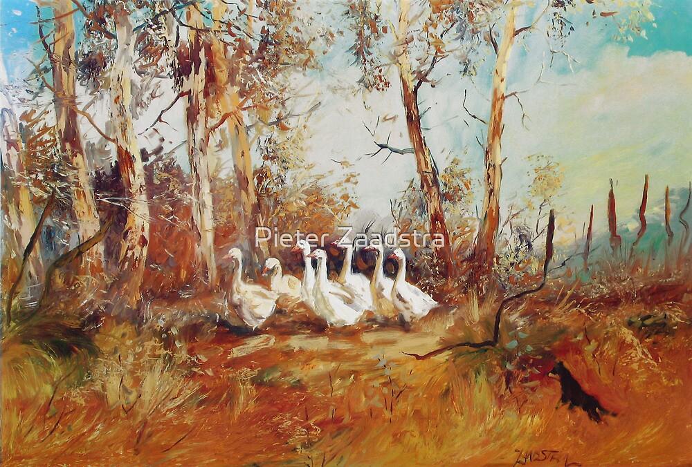Herding the Farm Geese - Australian Kelpie by Pieter Zaadstra