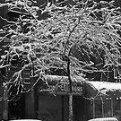 Snowy New York street by hidden-design