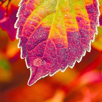 Frosty Leaf (P.24) by Darling2425