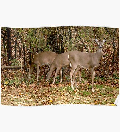 Deer Company in NJ Poster
