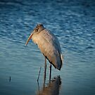 Gray Stork Morning Light by TJ Baccari Photography