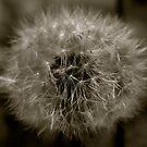Blow Me... by raneangel