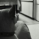 Dog Bowl Dreams by J J  Everson
