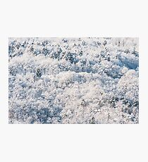 Snow on the wood Photographic Print