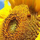 Ladybug tourist in Sunflower city by karuna