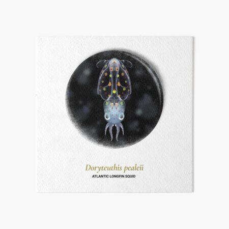 The Circles of Life: Atlantic Longfin Squif Art Board Print