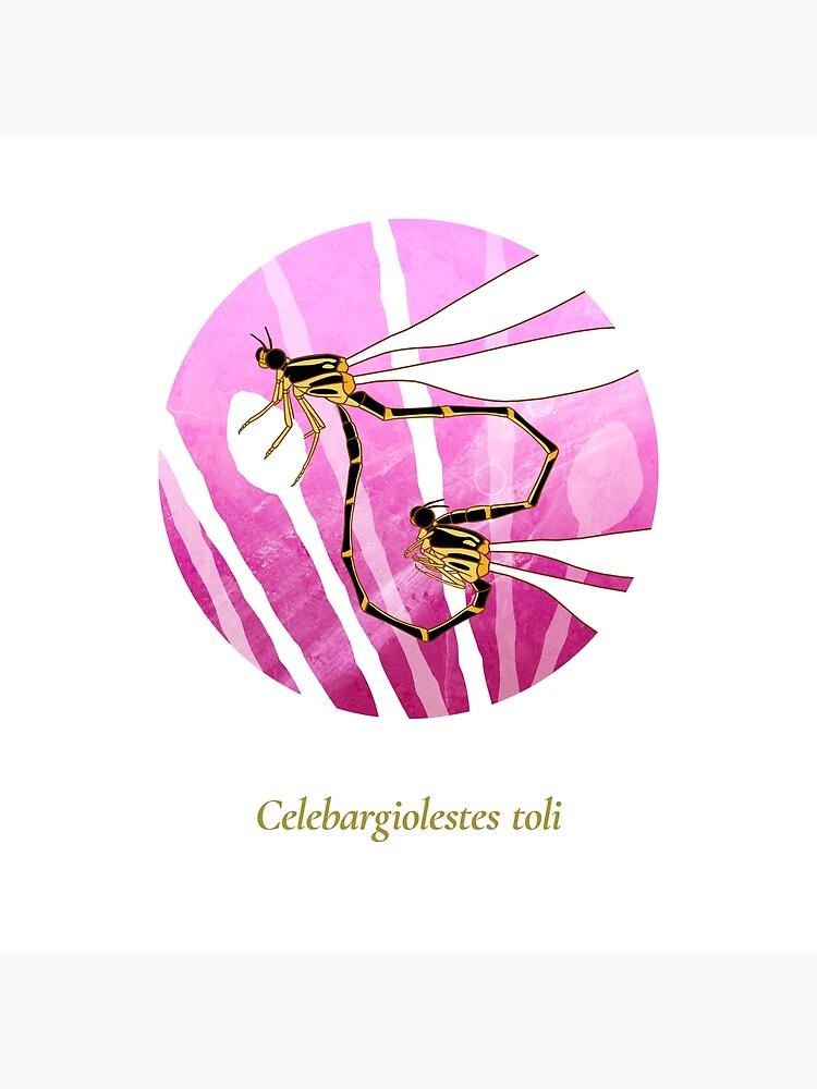 The Circles of Life: Celebargiolestes toli by franzanth