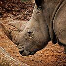 The Sad Rhino  by Marie Lydia