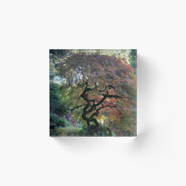 Favorite Tree Acrylic Block