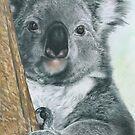Kool Koala by Samantha Norbury