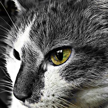 Cat Eye  by cathpinc