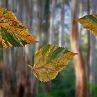 Falling Leaves by myraj