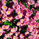 Pink Flower Bushes by OliviaHathaway
