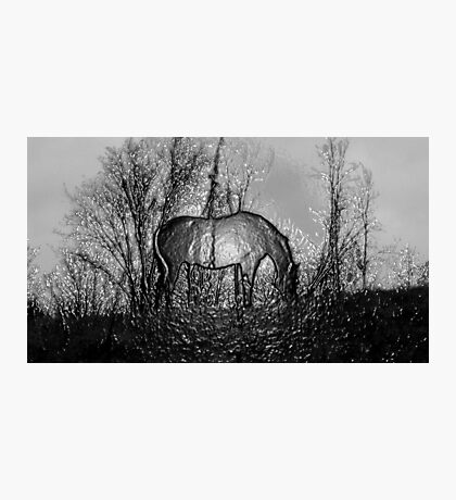 Techno Horse Photographic Print