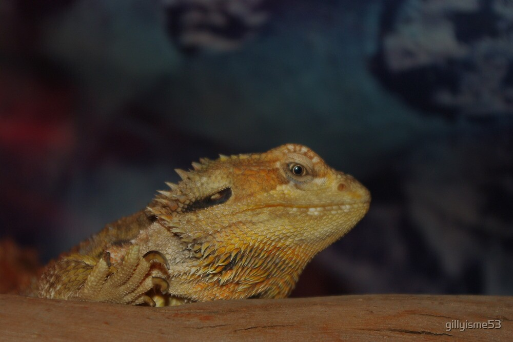 Bearded Dragon by gillyisme53