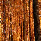 Golden Forest by elasita