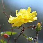 Atemberaubendes Gelb von lizdomett