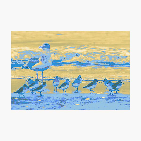 Shore Birds Photographic Print