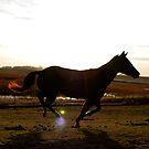 Running Horse by minskeep