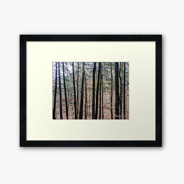 trees in the fall Framed Art Print