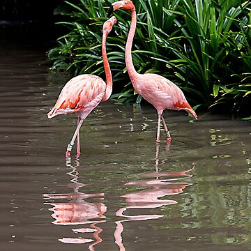 Flamingo Beauty by MarylouBadeaux