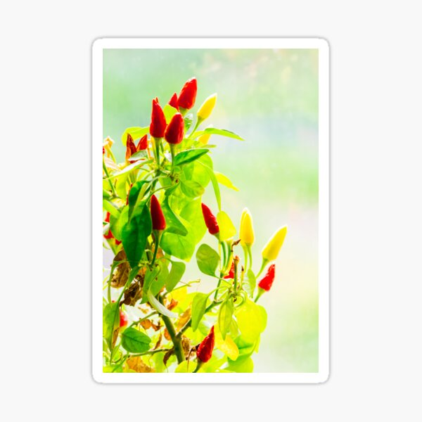 red and yellow peppers grow Sticker