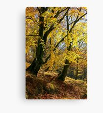 golden foliage in the forest Canvas Print