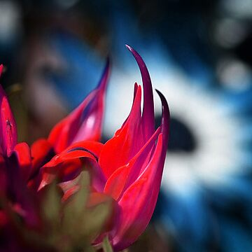 Flowers (F.120) by Darling2425