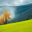 tree with golden foliage on grassy hillside by mike-pellinni