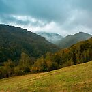 forest on the grassy hillside by mike-pellinni