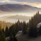 sea of fog in forested valley by mike-pellinni