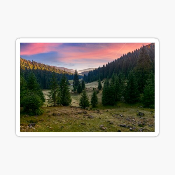 spruce forest in foggy valley at reddish sunrise Sticker