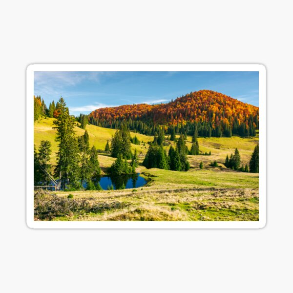 pond on a grassy meadow among spruce trees Sticker
