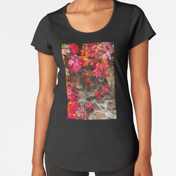 colorful texture of ivy plant on the stone wall Premium Scoop T-Shirt