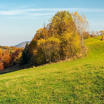 panorama of forest on grassy hill in autumn by mike-pellinni