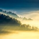 deep fog above the valley at sunrise by mike-pellinni